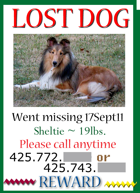 About Odr Capturing At Large Lost Missing Dogs