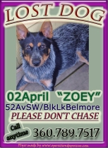 Zoey flyer_edited-1