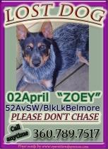 Zoey flyer_edited-1